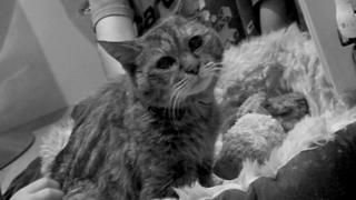 Poppy the cat