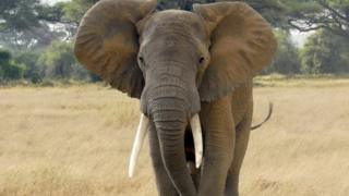 File photo: An elephant in Kenya