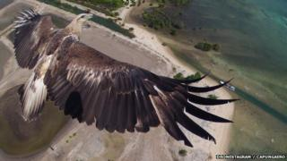 Drone photography eagle