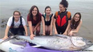 Five girls with bluefin tuna