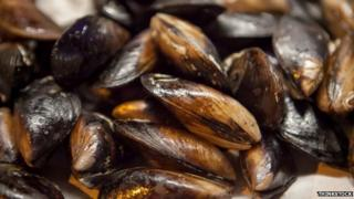 Mussels in their shells. Pic: Thinkstock