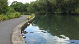 Dead birds in the water