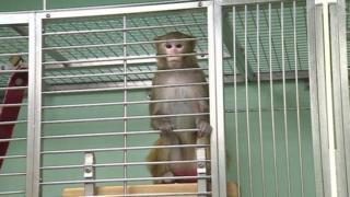 Monkey in cage