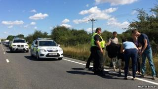 Cow holds up traffic on the A45, Raunds