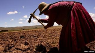 Paulina Momoni tills a field before planting December 12, 2005 in Curva, Bolivia.