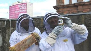 Bees on Glasgow City Chambers roof
