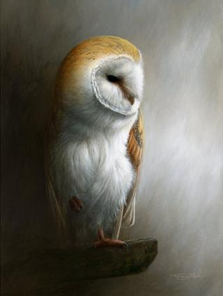 Painting of a Barn Owl by Jeremy Paul