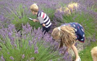 Children looking for bumblebees