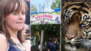 Sarah McClay, Zoo Safari, Sumatran Tiger