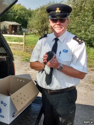 RSPCA Inspector Rohan Barker and a Manx shearwater