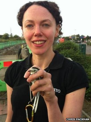 Pied Wagtail caught at Great Yarmouth Tesco