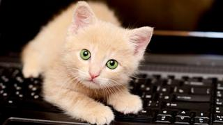 Celtic kitten