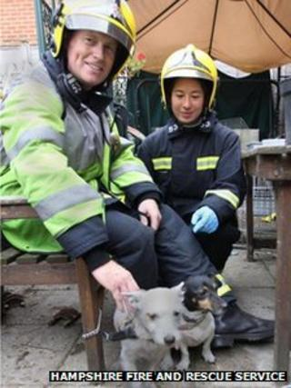 Firefighters with dogs