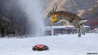Ski race between a tortoise and a rabbit. The tortoise won.