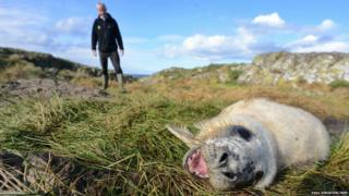 Rangers look on at the first seal pup