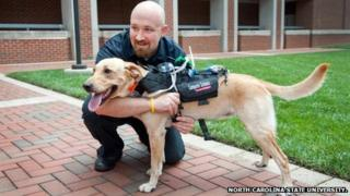 Prototype wearable tech for dogs