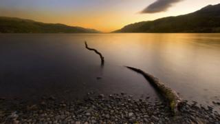 Tree trunk in Loch Ness