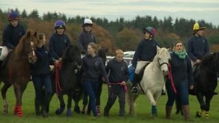 Dartmoor Hill Ponies
