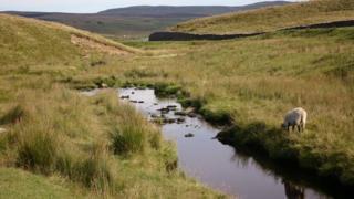 A stream running through open land