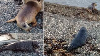 Two seals rescued and released