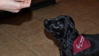 Aster the dog in training