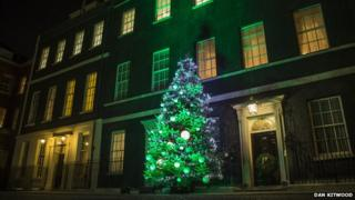 Tree outside Downing Street