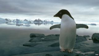 Adelie penguin on Rothera Point in the Antarctic