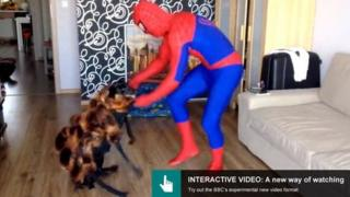 Dog dancing with spiderman
