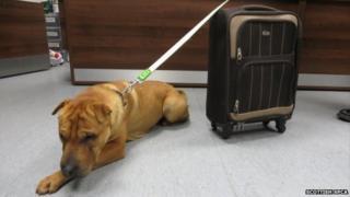 Abandoned dog Kai