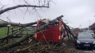 Bus hit by tree