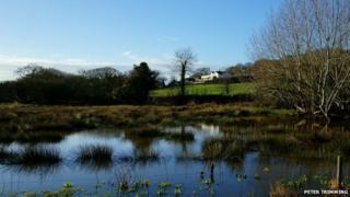Scotchells Brook