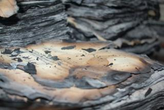 Burnt archive documents