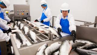 Fish processing at a Morrisons site in Grimsby