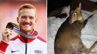 Greg Rutherford and injured muntjac deer