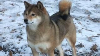 Janice Bannister's dog, Sylvia