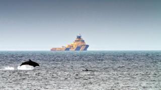 Dolphins off Aberdeen