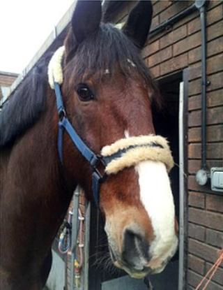 Brian the horse