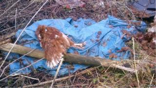 One of the dead chickens