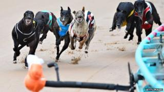 General view of race meeting at The Meadows Greyhound track on February 18, 2015 in Melbourne, Australia.