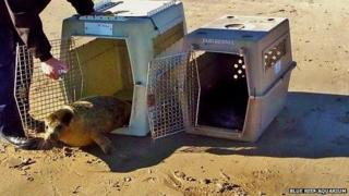 The seals are released from their crates