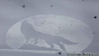 Outline of a wolf in snow