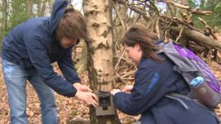 CCTV camera being fitted to a tree