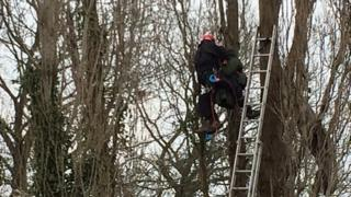 """""""Security specialists"""" have been removing treetop protesters at Stapleton Allotments since Thursday"""