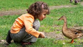 girl feeds duck