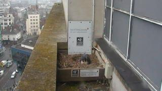 Peregrine webcam on NTU building