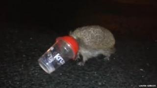 Hedgehog stuck in cup