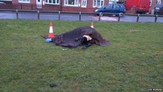Dead horse in Wheatley Hill