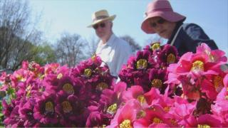 A couple look at a bright pink and purple flower display as they walk past