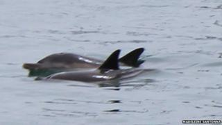 Dolphins in Weymouth
