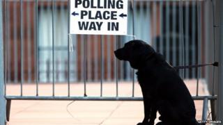 Dog waits outside polling station